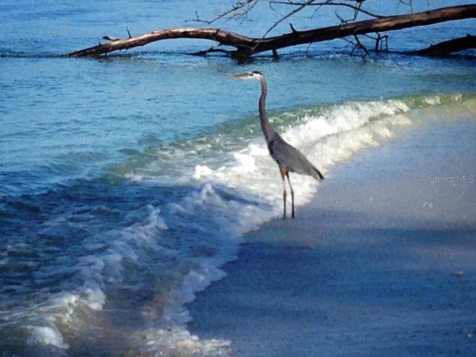 Heron on the Beach. - Single Family Home for sale at 540 N Gulf Blvd, Placida, FL 33946 - MLS Number is D6110801
