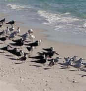 Birds on the Beach. - Single Family Home for sale at 111 Kettle Harbor Dr, Placida, FL 33946 - MLS Number is D6104218