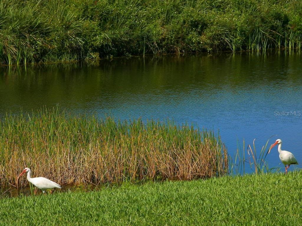 Lake - Single Family Home for sale at 1010 Oak Preserve Ln, Osprey, FL 34229 - MLS Number is A4207598