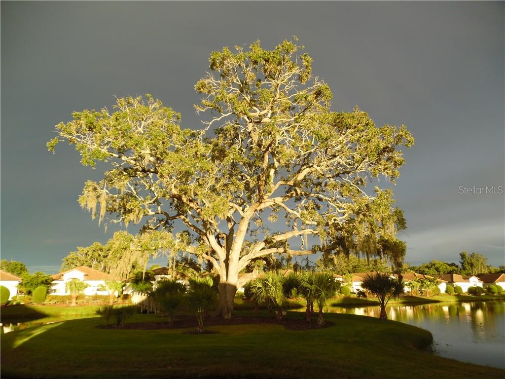sunset on the Grand Oak at Grand Oaks - Single Family Home for sale at 239 Nolen Dr, Venice, FL 34292 - MLS Number is N6101457
