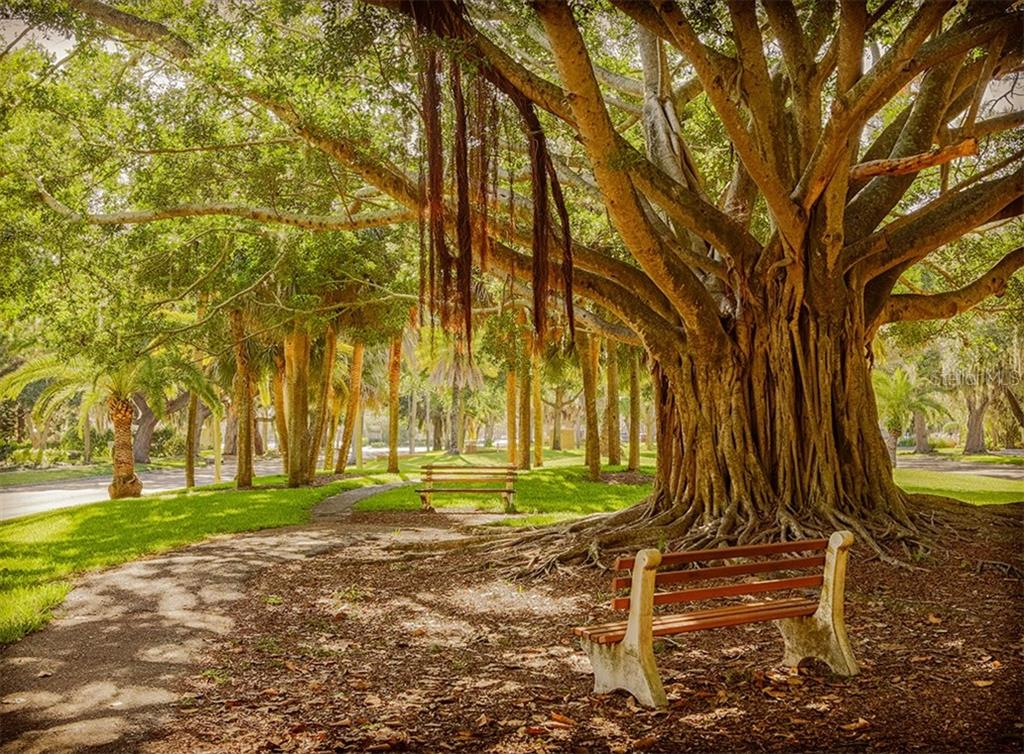 Banyan tree - Vacant Land for sale at 230 Nassau St S, Venice, FL 34285 - MLS Number is N6111555